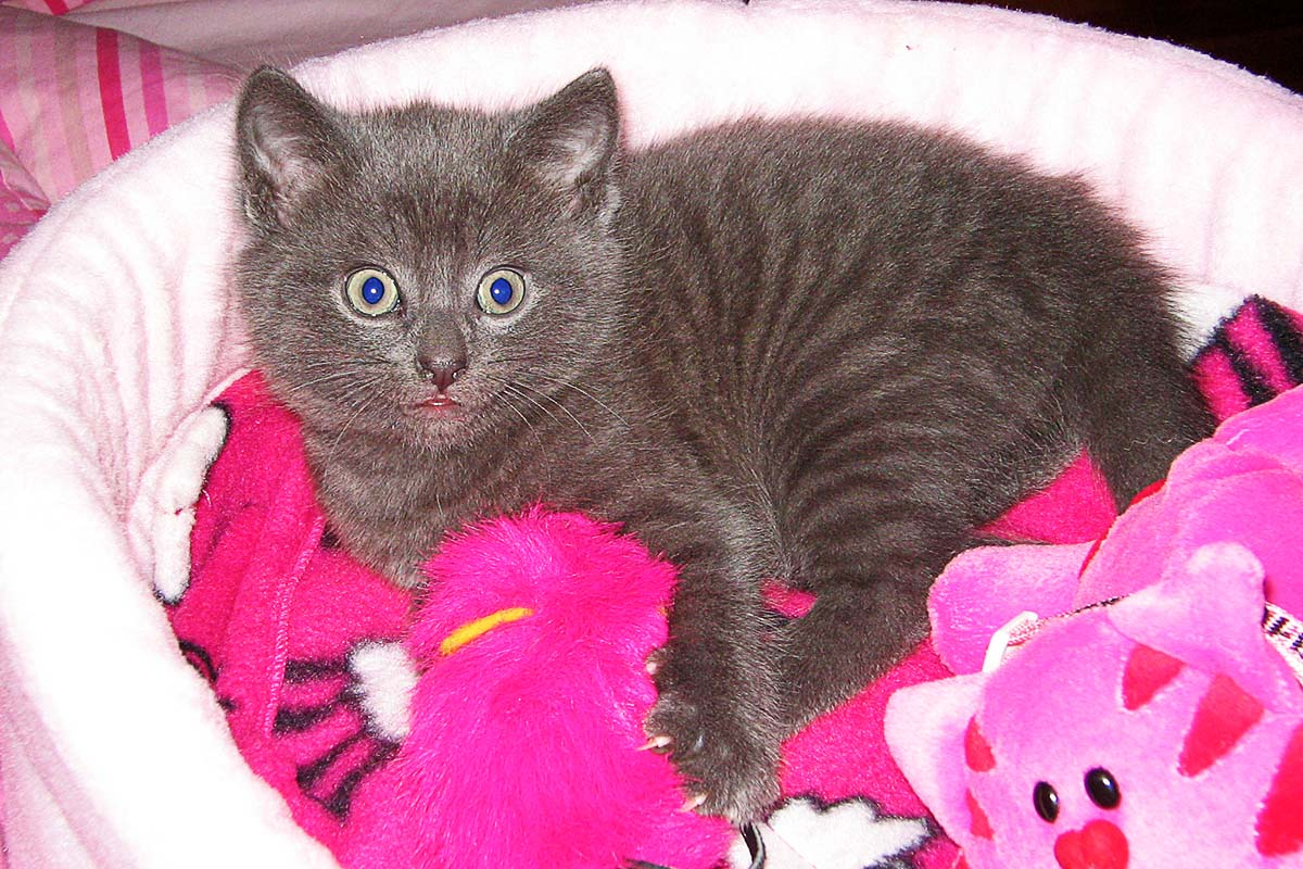 Kitten in pink bed
